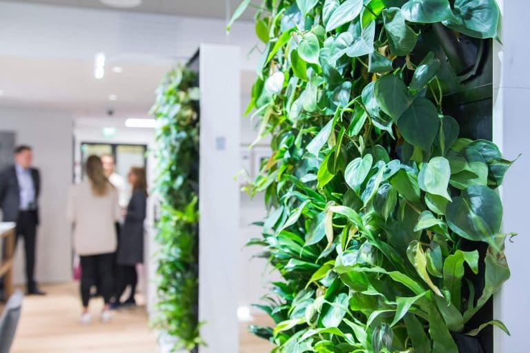 Aki Soudunsaari founder Naava green sustainable workplace furniture green walls plants